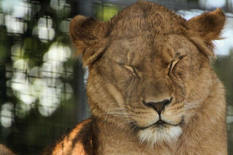 Newquay Zoo - Avalon Guest House - avalonguesthouse.co.uk