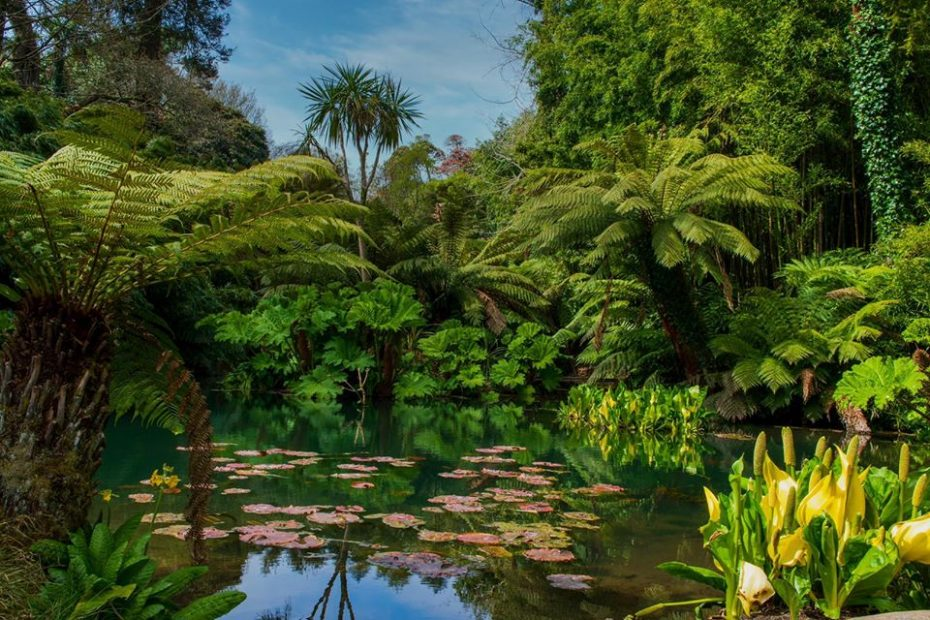 The Lost Gardens of Heligan - avalonguesthouse.co.uk - 100923529_3102857716438615_4578945474140045312_o