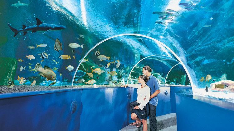 Blue Reef Aquarium-avalonguesthousenewquay-avalonguesthousenewquay.co.uk