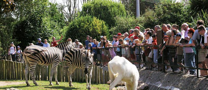 Newquay Zoo-avalonguesthousenewquay-avalonguesthousenewquay.co.uk