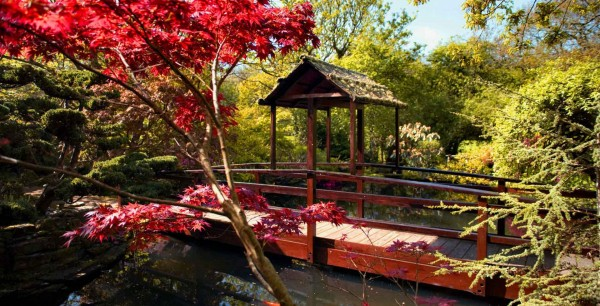Japanese Garden Newquay, Cornwall-valon Guesthouse-avalonguesthousenewquay.co.uk Things to do In Newquay, Cornwall